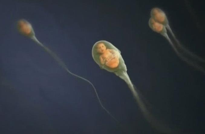 zhizn-spermatozoida-videorolik