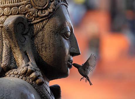 Будда и воробей.