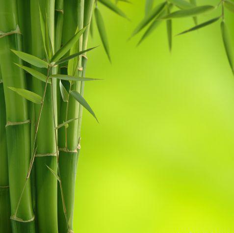 Будьте  как  полый бамбук.