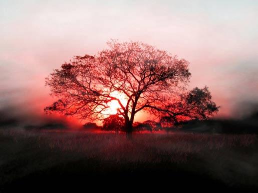Сознательная жизнь награждается сознательной смертью. Часть I