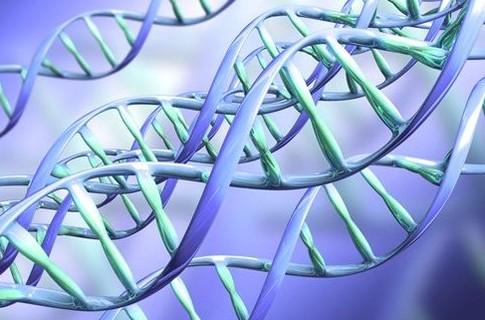 Динамическая медитация изменяет гены.