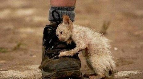 Что такое сострадание.