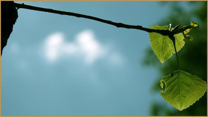 Природа – всегда прекрасна, эго – всегда уродливо.