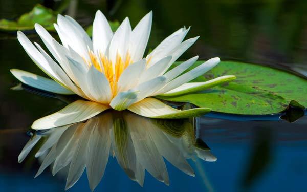 Медитирующий не нуждается  в личном руководстве.
