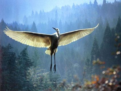 Чтобы летать – нужно два крыла.