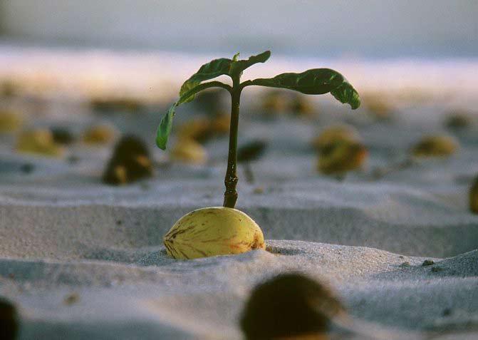 Занимательная и поучительная история одного растения. (часть 9)