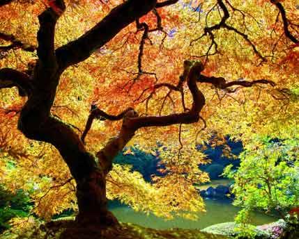 Подружитесь с Деревом.