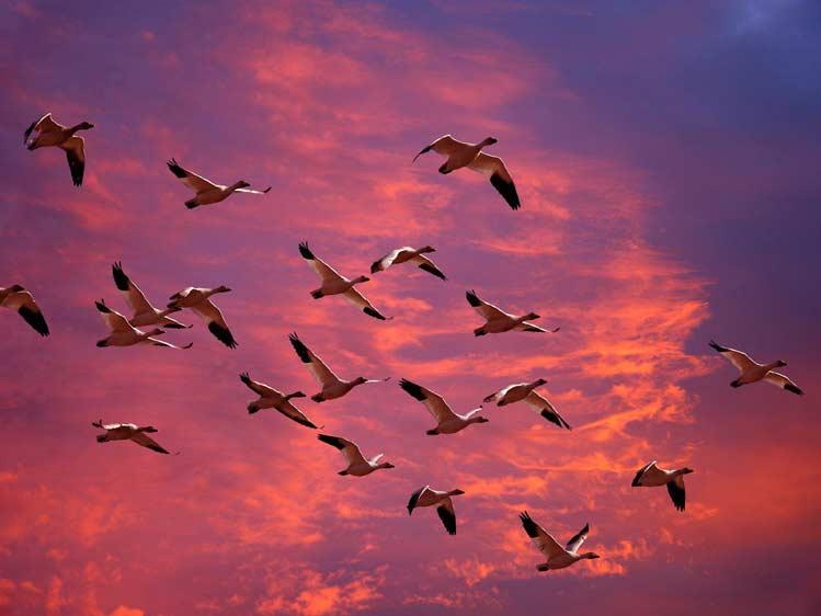 Прогноз погоды: птицы против метеорологов (часть 9)
