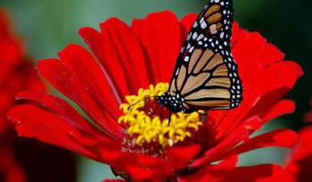 butterfly_022