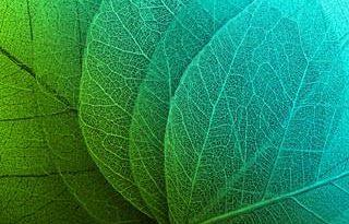 macro_leaves