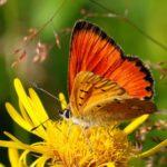 Тибетские пульсации «Божественная любовь» Яички и Яичники