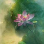 Секрет жизни, любви и медитации.