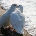 Семинар для женщин «Освобождение и любовь»