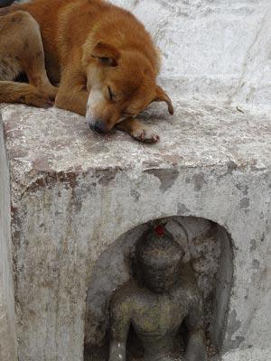 Что общего между Буддой и собакой. Часть I.