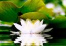 У медитации нет цели.