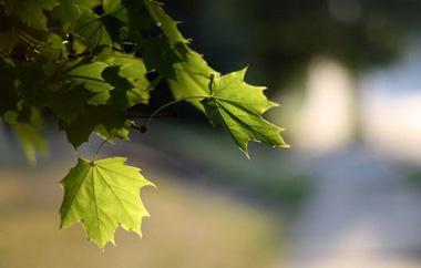 Почему деревья зеленые. Часть I.