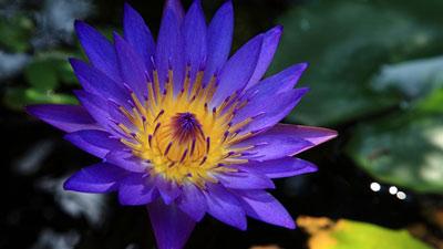 Открытый цветок.