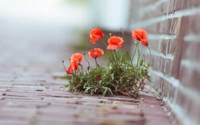 Цветок или камень.